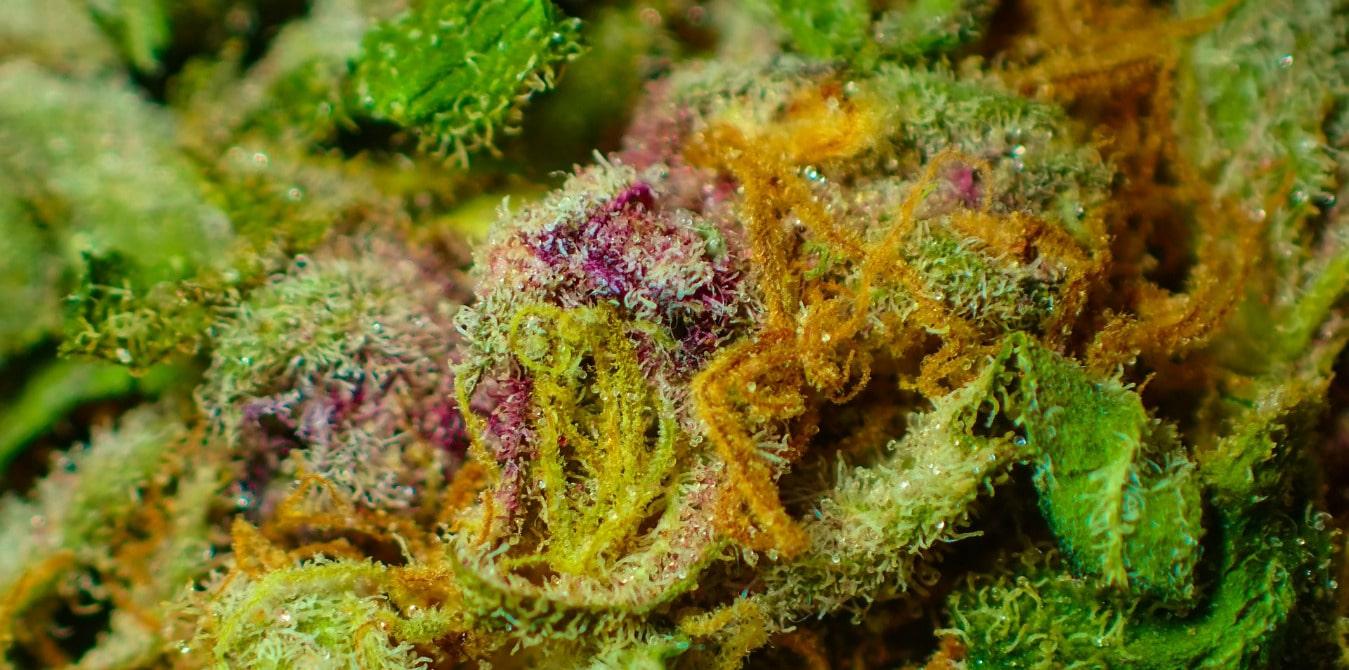 Wirkstoff im Cannabis